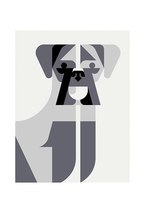 Josh Brill Canine